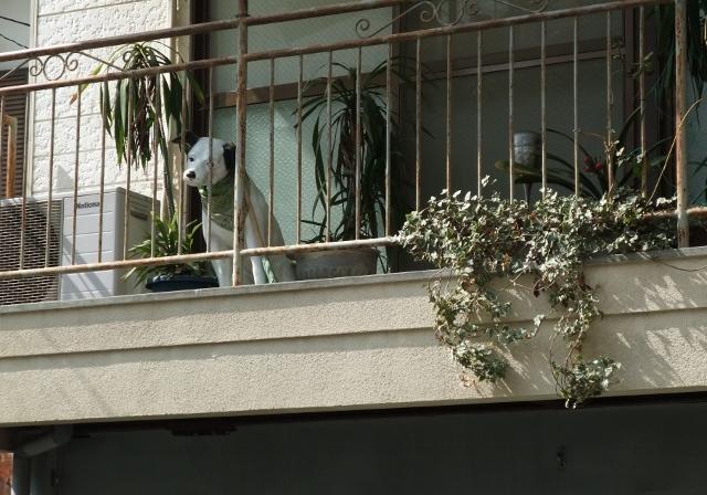 無題 ビクター犬 fujifilm f100fd  籠町 20110226 DSCF2036 (640x448).jpg