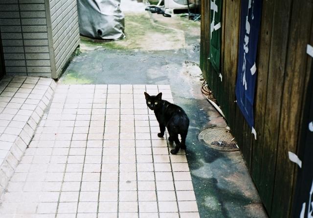 猫 客引き minolta xd md50f1.7 fuji100 20150711 014 (640x447).jpg